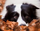 Qué raza de perro deberías adoptar según tu signo del Zodiaco